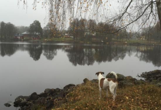 Hunden Jeppe överblickar sin hemby Uranäs från Vikafällan – en informell mötesplats. Här står Conny Rosanders inbjudande bänkar 2016!